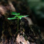 close up environment flora ground 1151418